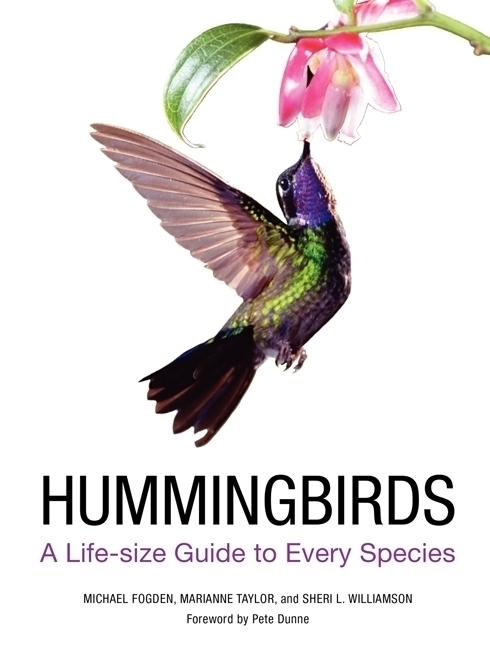 HUMMINGBIRDS : A LIFESIZE GUIDE TO EVERY SPECIES